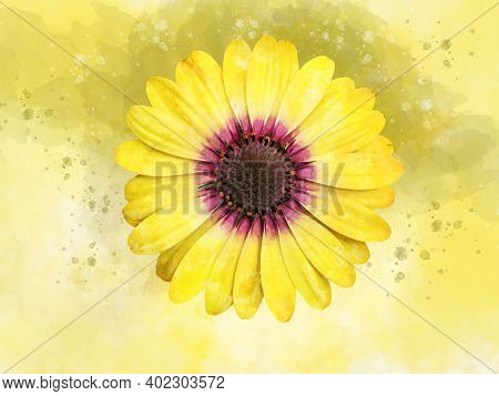 A Watercolor Drawing Of A Beautiful Yellow Daisy Flower. Botanical Art. Decorative Element For A Gre
