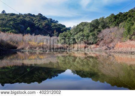 Morning Views Of Waterdog Lake Park In Belmont, San Mateo County, California, Usa