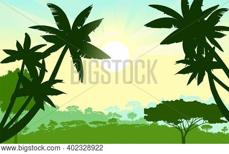 Palm Trees. Jungle Silhouette. Rainforest. Panoramic Landscape. The Morning Sun Is On The Horizon. D