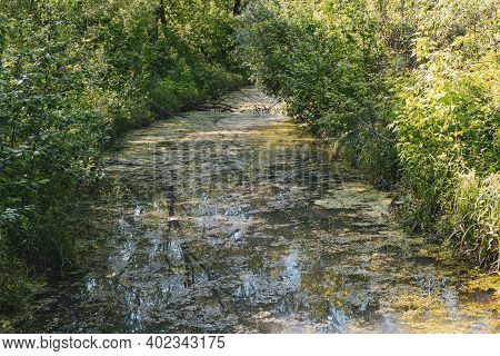 Overgrown Water In The Swamp. Green Forest Lake Overgrown With Duckweed. Swamp In The Forest Losiny