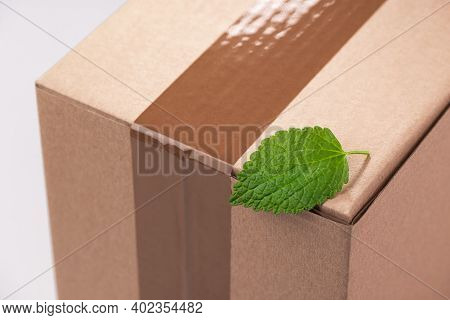 Close-up On A Fresh Green Leaf On A Cardboard Box
