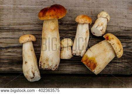 Freshly Picked Porcini Mushrooms On Rustic Wooden Table. Top View