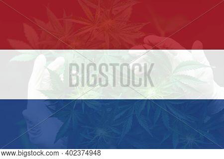 Leaf Of Cannabis Marijuana On The Flag Of Netherlands. Weed Decriminalization In Netherlands. Cannab