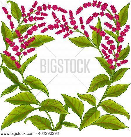 Amaranth Plant Vector Frame On White Background