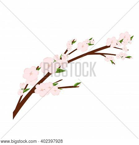 Cherry Sakura Blossom Branch, Tree. Flowers And Petals. Pink Asian Vector Art.