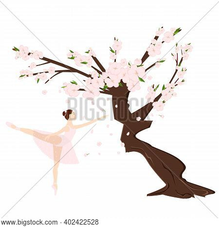 Cherry Sakura Blossom Branch And Ballerina, Falling Petals, Tree. Flowers And Petals. Pink Asian Vec