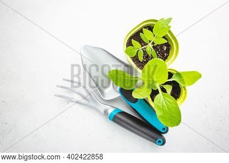 Gardening Tools, Seedlings And Fertile Soil On White Background Seen From Above, Top View. Gardening