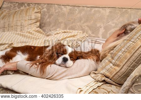 Charming Cavalier King Charles Spaniel Sleeping On An Arm Of A Woman Who Is Relaxing On A Sofa