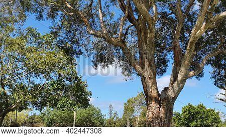 Beautiful Parklands at Carey Park, Southport, Queensland, Australia