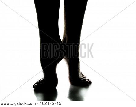 Silhouette Of Two Women's Elegant Bare Feet On A White Background. Legs Stretch Up On Tiptoe.