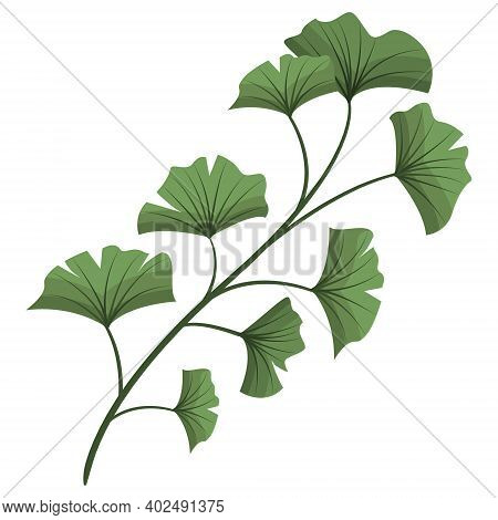 Ginkgo Biloba Branch; For Packaging, Posters, Banners, Web Design. Vector Illustration.