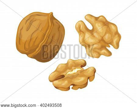 Cartoon Walnut. Nuts In Shell And Peeled Pieces. Isolated Natural Plant Ingredient. Organic Vegetari