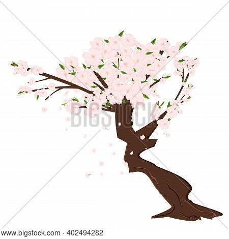 Cherry Sakura Blossom Branch With Falling Petals, Tree. Flowers And Petals. Pink Asian Vector Art.