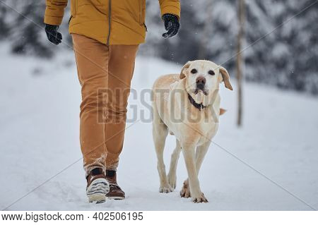 Man With Dog In Winter Nature. Obedient Labrador Retriever Walking With His Owner In Snow. Jizera Mo