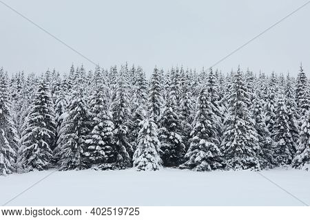 Winter Scene In Mountain Forest During Frosty Day. Snowy Trees After Blizzard, Jizera Mountains, Cze