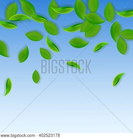 Falling Green Leaves. Fresh Tea Neat Leaves Flying. Spring Foliage Dancing On Blue Sky Background. A