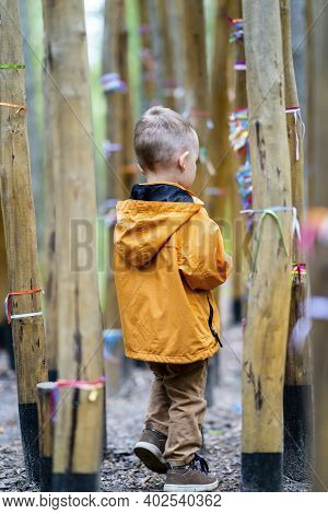Child With Brown Pants And Orange Jacket Wondering Alone Between Bamboo Trees