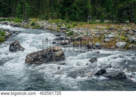 Powerful Mountain River Flow Through Forest. Beautiful Alpine Landscape With Fast River Among Rich V