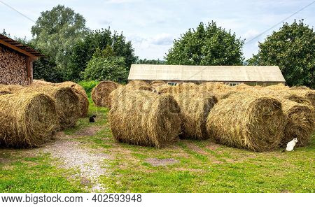 Hay Storage With Harvested Bales Of Hay For Cattle. Agricultural Barn Canopy With Round Bales Hay In