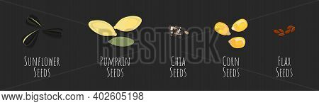 Seeds Vector Collection With Sunflower, Pumpkin, Chia, Corn, Flax Seed Bean Flat Set. Nature Health