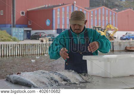 Inuit Eskimo Man Preparing Fresh Fish On A Market In Qaqortoq Greenland