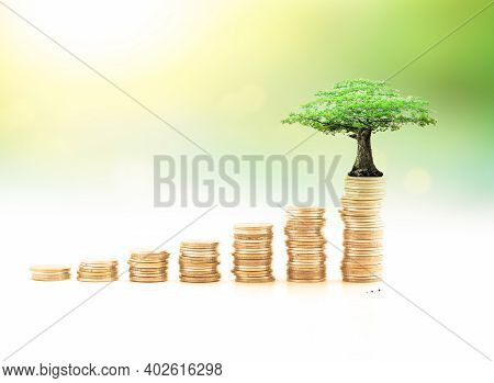 Endowment Fund Concept: Stacks Of Golden Coins With Big Tree On Blurred Nature Background