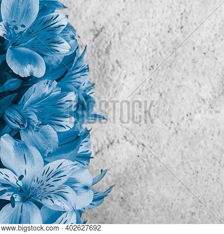Layout For A Greeting Card. A Bouquet Of Beautiful Blue Orchids On A Light Background. Mocap, Blank,