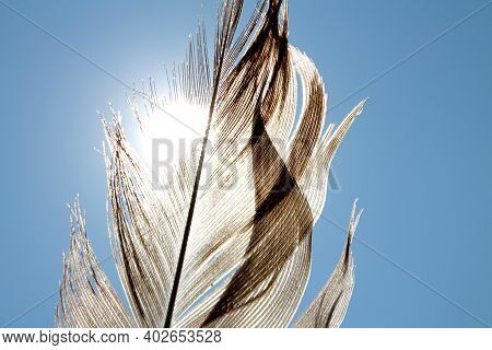 One Large Feather As Symbol Of Peace And Freedom On Blue Sky Background. Feather Covers Part Of The