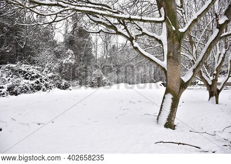 Field Of Walnut Trees Next To Snow Covered Country Road. Effects Of The Snow Storm Called Filomena I
