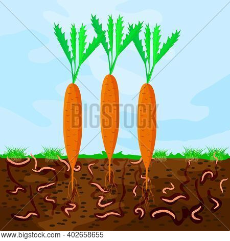 Ground Cutaway With Carrot And Earthworm. Earthworms In Garden Soil. Composting Process With Organic