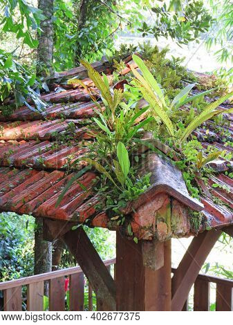 Tiled Roof Of A Wooden Observation Tower Covered With Tropical Vegetation. Ceiling Of Pavilion In Tr