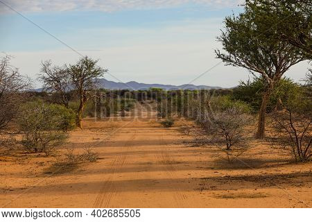 Lonely Dirt Road Through The Trees And Shrubs In Namibia