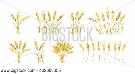 Wheat Ears Set Sheaf Bunch Grain Ripe Vector