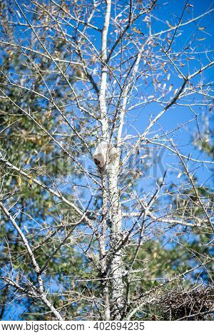 Toilet Paper Roll Dry Rot Resting On Branch In Tree With Blue Sky