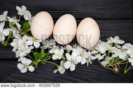 Organic Hen Eggs, Bio Produce. Composition Of Blooming Tree Branches. Natural Easter Eggs With White