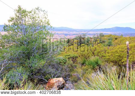 Chaparral Plants Besides Pinyon Pine Trees Where The High Desert And Mountainous Terrain Meet Taken