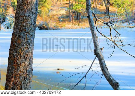 Deciduous Trees Surrounding A Frozen Pond Taken At A Riparian Woodland During Winter In The Rural Co
