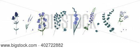 Set Of Wild And Garden Flowers And Decorative Green Plants Isolated On White Background. Collection