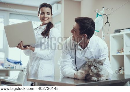 The Veterinarian Carefully Holds The Cat On Table. Veterinarian With A Stethoscope Stands Near The T
