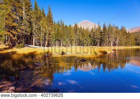 The Tioga Road and Pass in Yosemite Park. Forests and mountains are reflected in the smooth water of the lake. Sunrise. USA. North America