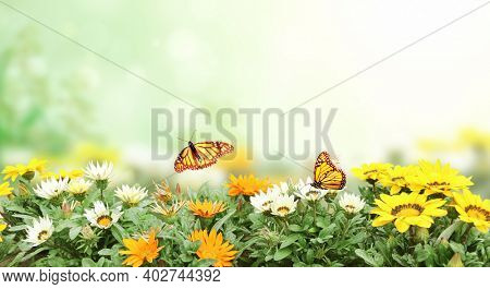 First spring wildflowers yellow, white and orange Adonis vernalis (Pheasant's eye). Sunny spring background flowers and butterflies on flowerbed. Horizontal summer banner with False hellebore flower
