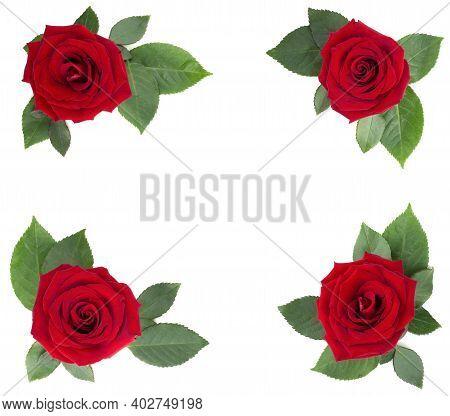 Red Rose Flowers And Leaves Arrangement Corner Border Frame Design Element Isolated On White Backgro