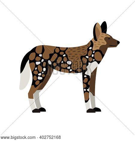 African Wild Dog. Cartoon Image Of Savannah Creature, Carnivore Of Nature, Vector Illustration Of Wi