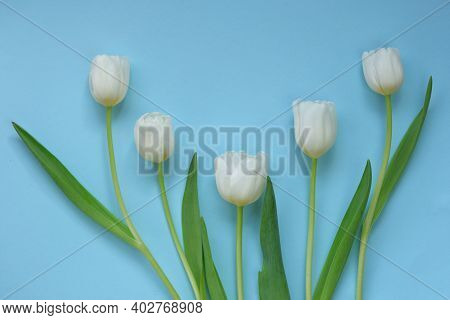 White Tulips On A Light Blue Background. White Spring Flowers. Floral Greeting Card Blank. Floral De