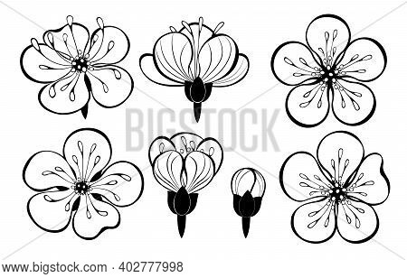 Set Of Outline, Black, Artistically Drawn Sakura Flowers On White Background. Japanese Cherry Blosso