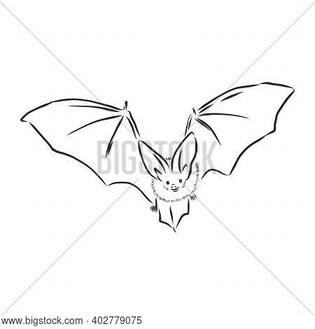 Black And White Flying Halloween Vampire Bat, Sketch Style Vector Illustration Isolated On White Bac