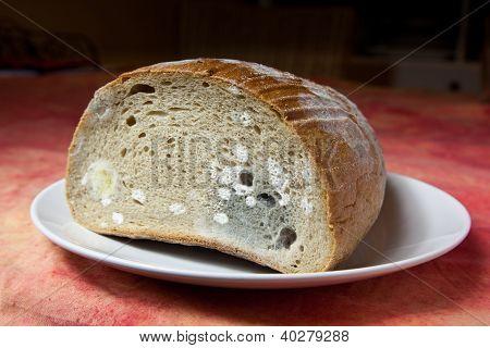 Mildew Bread