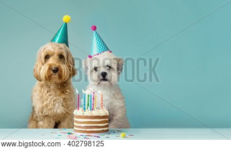 Two cute dogs with party hats and birthday cake