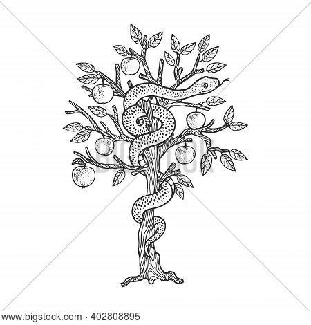 Biblical Serpent Snake On Apple Tree Sketch Engraving Vector Illustration. T-shirt Apparel Print Des