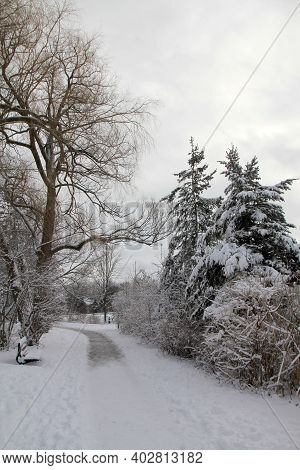 The Winter Landscape With Trees And Trail